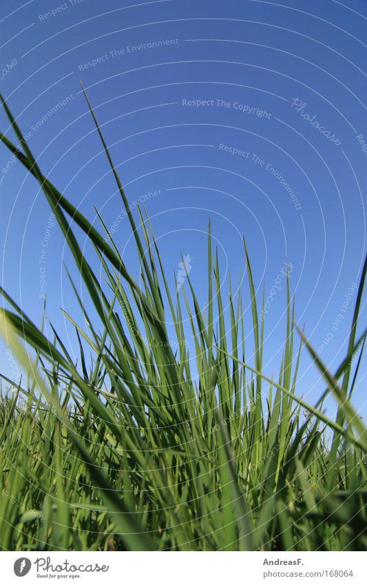 Grasgeflüster Farbfoto Außenaufnahme Detailaufnahme Textfreiraum oben Tag Froschperspektive Umwelt Natur Pflanze Sommer Umweltverschmutzung Umweltschutz Wiese