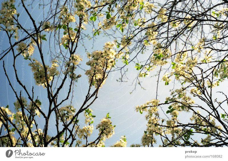 Menschenleer Farbfoto Außenaufnahme Tag Sonnenlicht Starke Tiefenschärfe Froschperspektive Umwelt Natur Pflanze Himmel Wolkenloser Himmel Frühling Sommer