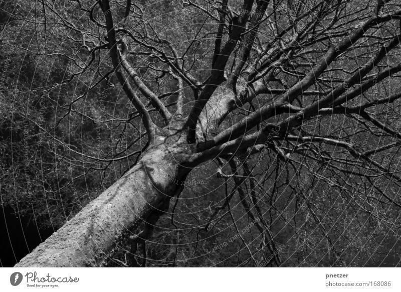 Düster Natur Baum dunkel Traurigkeit Angst Umwelt Gewitter
