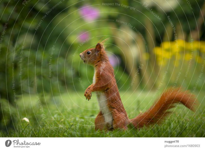 my little friend Natur grün Tier Wald gelb Wiese Gras Garten braun orange Park Wildtier authentisch laufen beobachten niedlich