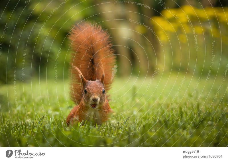 Oops, zielt der auf mich? Natur Sommer grün Tier Wald Tierjunges gelb Frühling Wiese Gras Garten braun orange springen Feld Wildtier