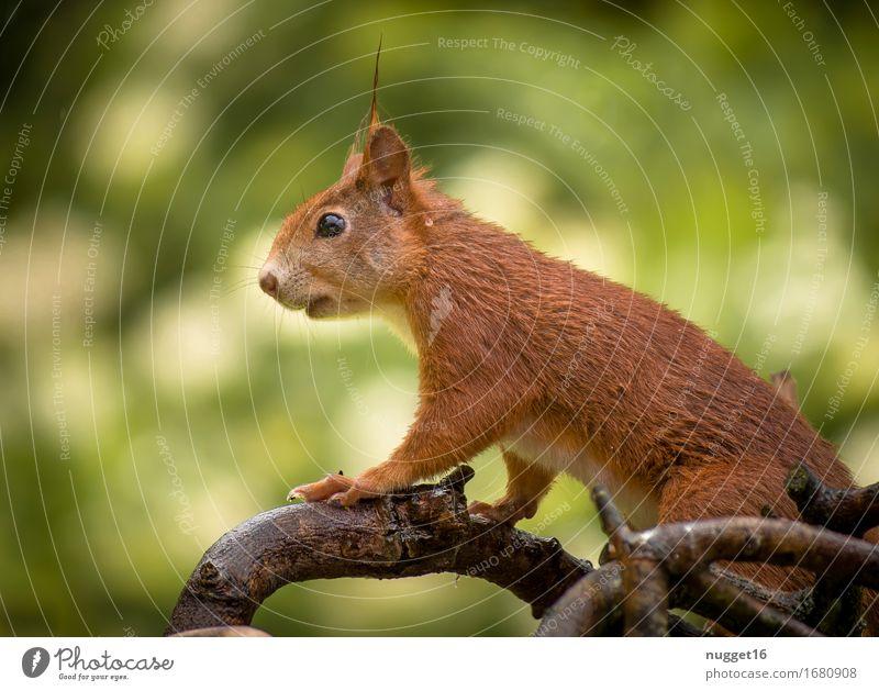 my little friend Tier Wildtier Eichhörnchen 1 Tierjunges sitzen ästhetisch Freundlichkeit lustig niedlich braun gelb grün orange Lebensfreude Geborgenheit