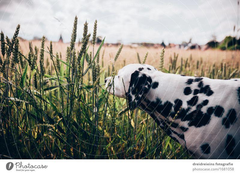 Neugierde. Hund Natur Sommer Landschaft Tier Umwelt Frühling natürlich Glück Freiheit Horizont Zufriedenheit Feld Idylle einzigartig Lebensfreude