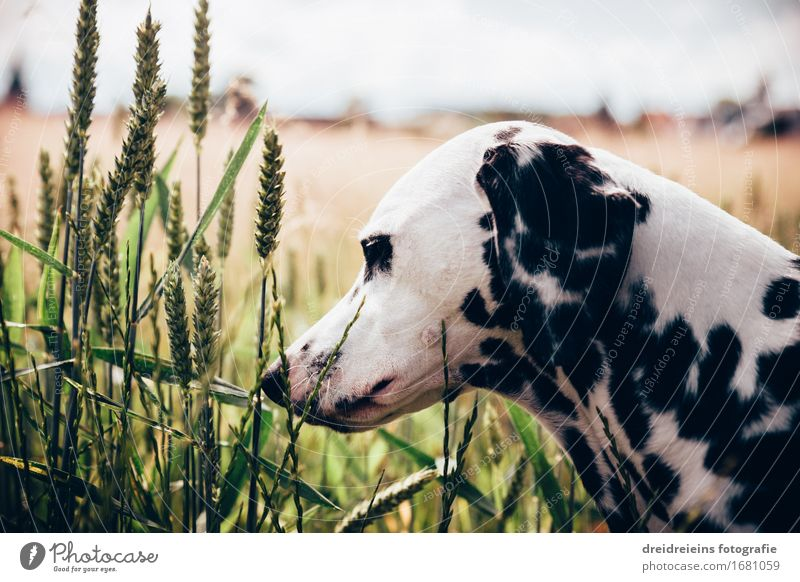Neugieriger Hund. Umwelt Natur Pflanze Horizont Frühling Sommer Tier Haustier 1 beobachten Freundlichkeit Glück natürlich Wärme Optimismus Vertrauen Sicherheit