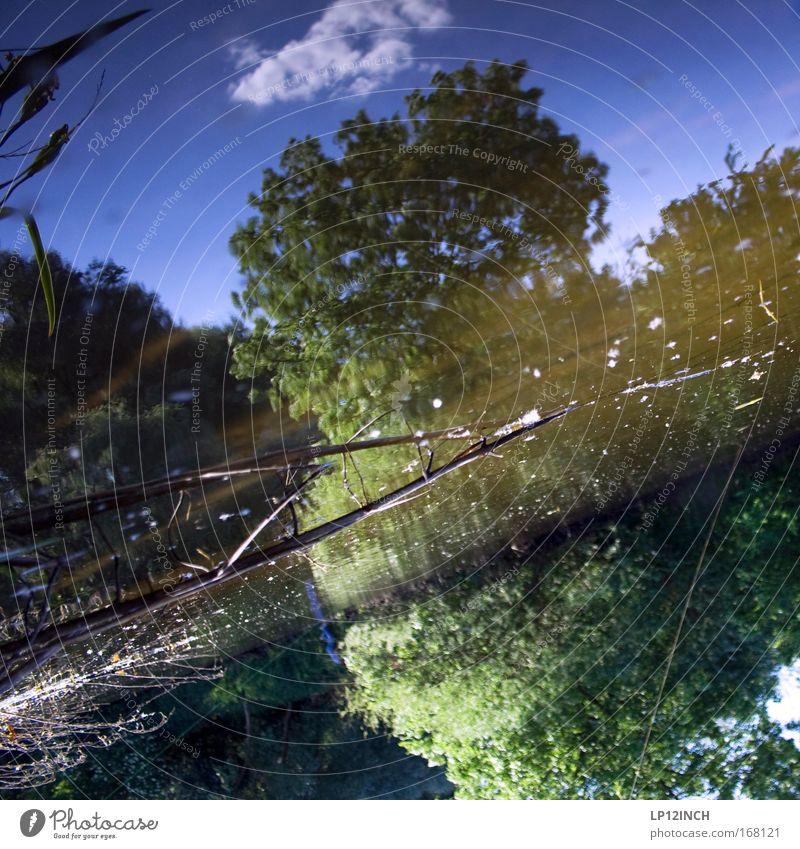 Die universelle Laufblei-Montage Natur Wasser Himmel Baum Sommer Ferien & Urlaub & Reisen Einsamkeit Freiheit See Landschaft warten Umwelt Seil Fisch Sträucher
