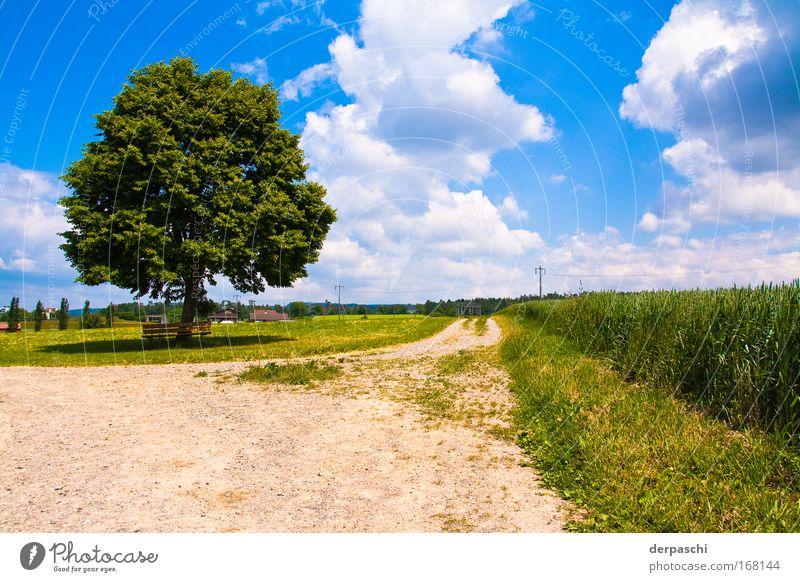 pause? Farbfoto Außenaufnahme Menschenleer Tag Schatten Kontrast Sonnenlicht Weitwinkel ruhig Sommer Natur Landschaft Himmel Wolken Schönes Wetter Baum Gras