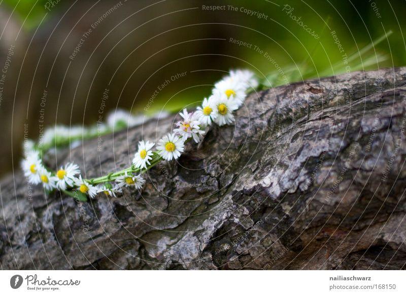 Frühlingsblumenkranz Natur schön alt weiß Baum Blume grün Pflanze ruhig gelb Blüte Gras Holz braun