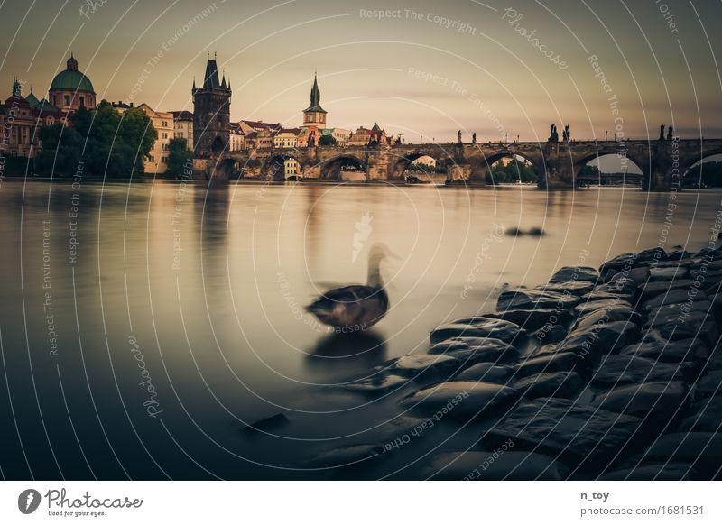 Město snů - Praha Stadt Sommer schön ruhig Tier dunkel Gefühle Bewegung genießen Kultur Brücke historisch Fluss Hauptstadt Flussufer Ente