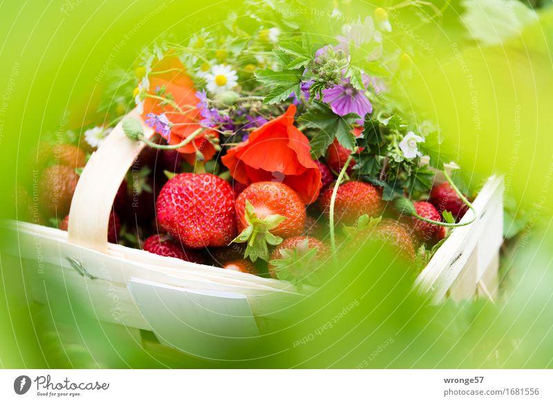 Erntefrisch III Sommer grün weiß rot Gesundheit Lebensmittel Frucht violett lecker Blumenstrauß Vegetarische Ernährung Erdbeeren Korb Wiesenblume angeordnet