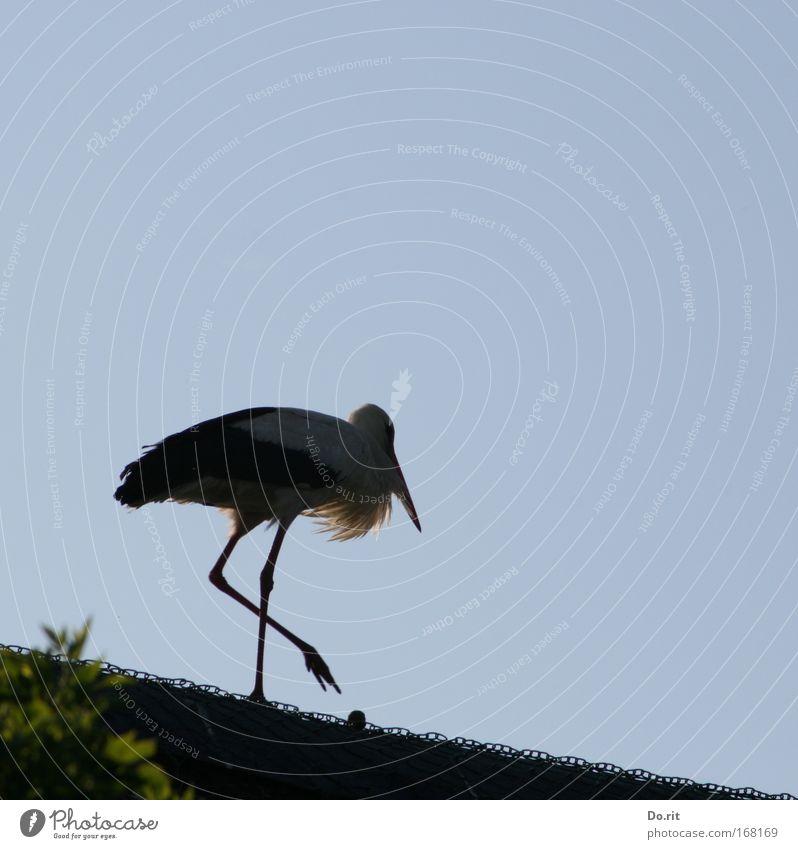Mach weiter so, ces Freiheit Geburt Hebamme Landschaft Schönes Wetter Sträucher Storch Stolz schreiten Reetdach Draht Weißstorch Schreitvogel Adebar