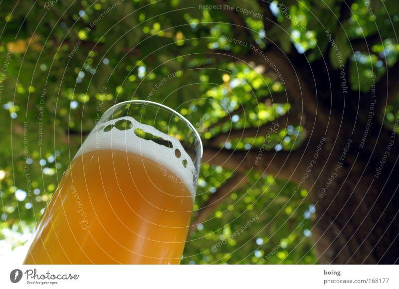 unterm Tisch liegen Natur Sommer ruhig Erholung Frühling Garten Park Freizeit & Hobby Getränk Schutz Bier Schönes Wetter Veranstaltung genießen Alkohol Terrasse