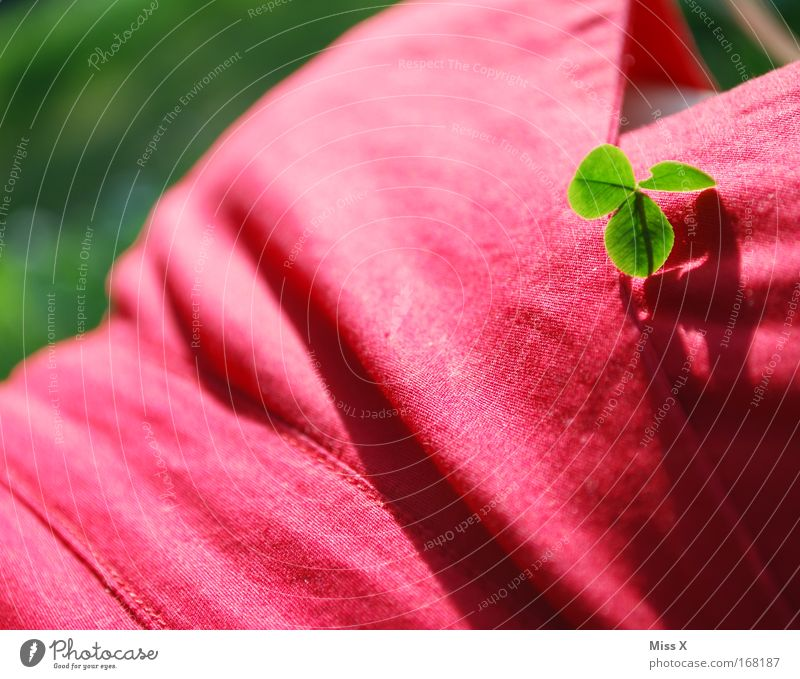 brustbild mit kleeblatt Mensch Natur Pflanze rot Sommer Ferien & Urlaub & Reisen Farbe Erholung Wiese feminin Glück Park wandern Ausflug Fröhlichkeit