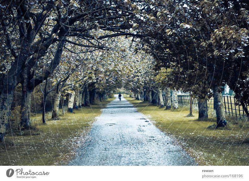 im fluchtpunkt Baum Umwelt Landschaft Straße dunkel Herbst Wege & Pfade Park gehen Spaziergang Fahrradfahren Allee Laubbaum Fluchtpunkt
