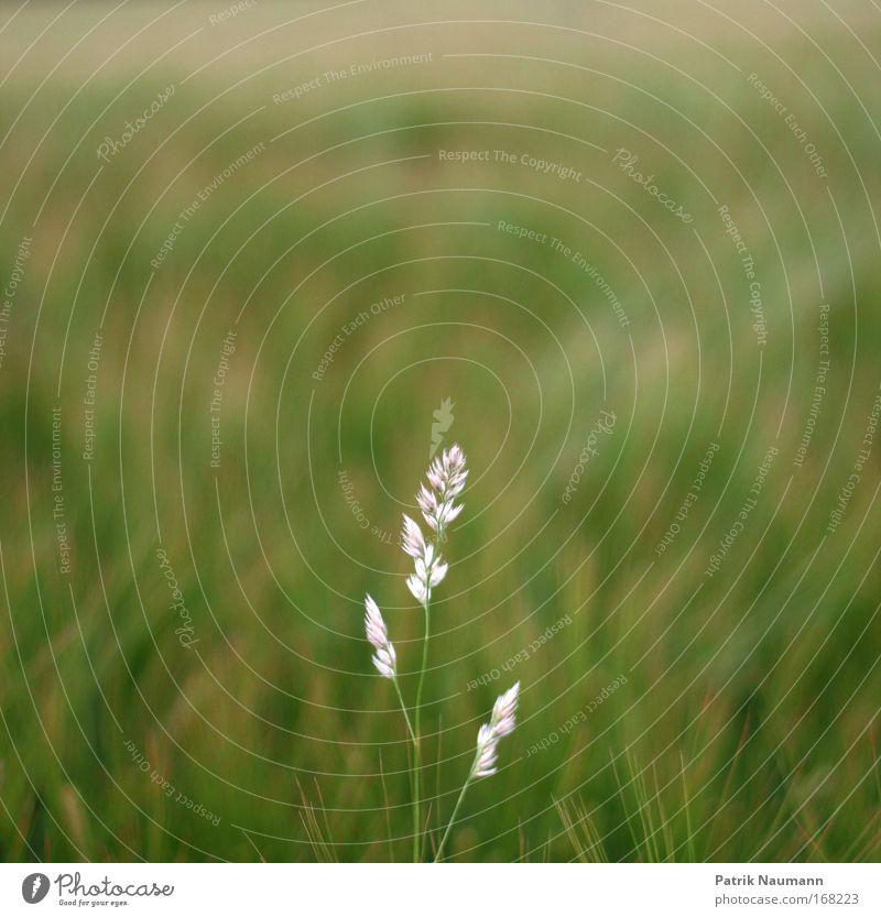 Alleinstellungsmerkmal Natur weiß Sonne grün Pflanze Sommer ruhig Gras Frühling Landschaft Feld Wetter Zeit ästhetisch Sträucher Duft