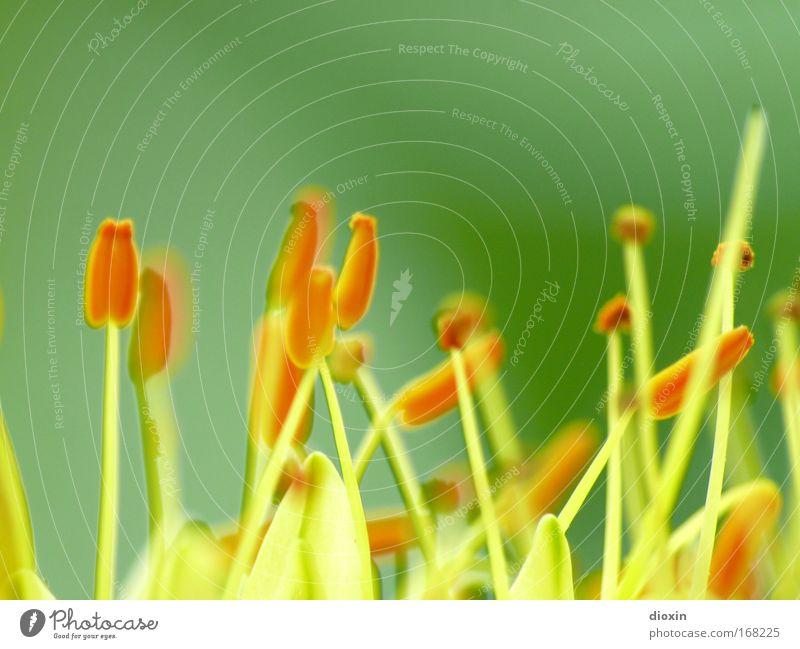 terrestrial life #1 Farbfoto Detailaufnahme Makroaufnahme Textfreiraum oben Tag Unschärfe Schwache Tiefenschärfe Duft Pflanze Blume Blüte exotisch Park