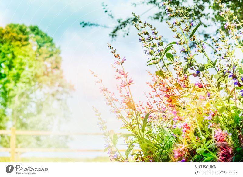Garten oder Park Hintergrund mit rosa Blumen und Sonnenlicht Lifestyle Design Sommer Umwelt Natur Landschaft Pflanze Himmel Frühling Herbst Schönes Wetter Baum