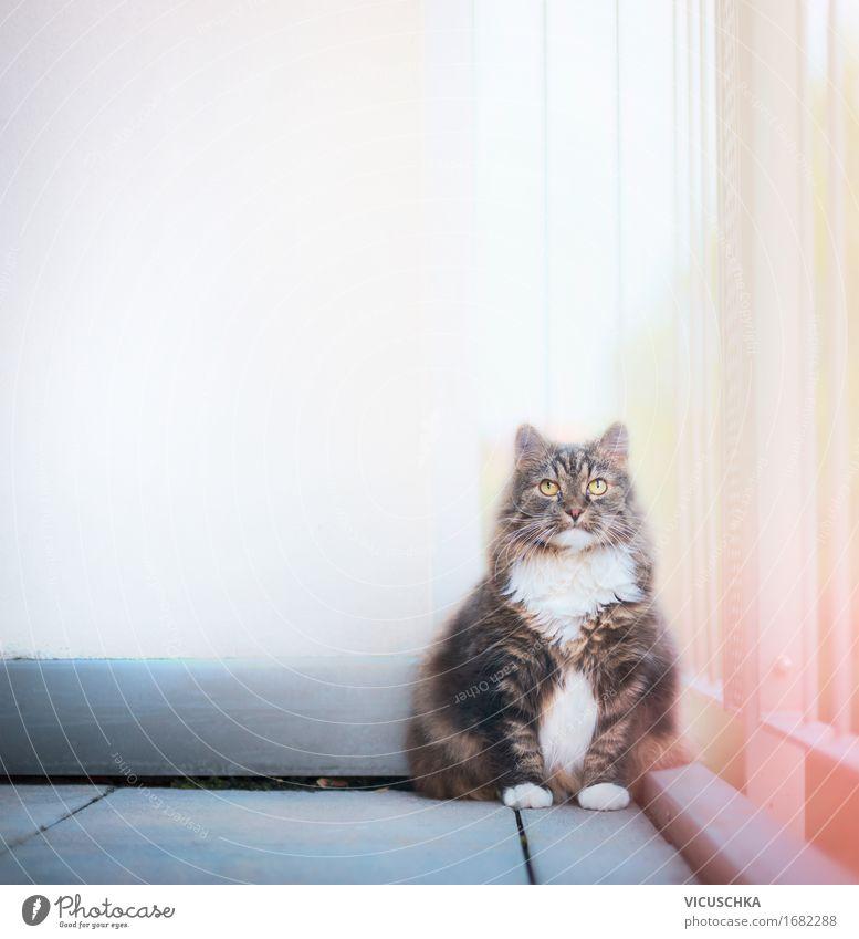 Katze auf Balkon Natur Tier Wand Lifestyle Mauer Häusliches Leben sitzen Haustier Terrasse