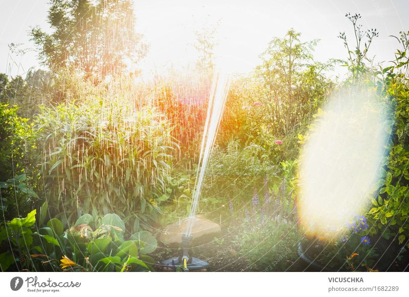 Sommergarten Bewässerung mit Sprinkler Lifestyle Design Häusliches Leben Garten Natur Landschaft Sonnenaufgang Sonnenuntergang Sonnenlicht Frühling