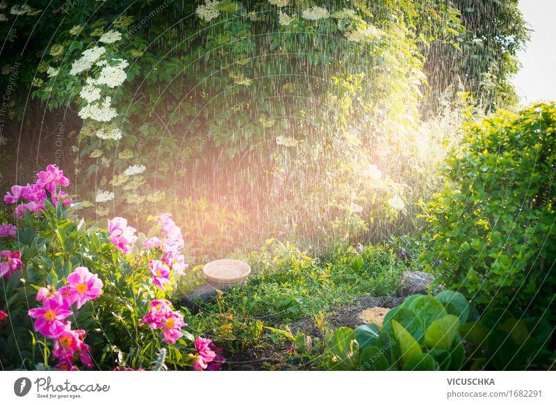 Regen mit Sonnenlicht im Sommergarten Natur Pflanze Landschaft Blume Blatt Blüte Frühling Gras Lifestyle Garten Design Park Sträucher Schönes Wetter