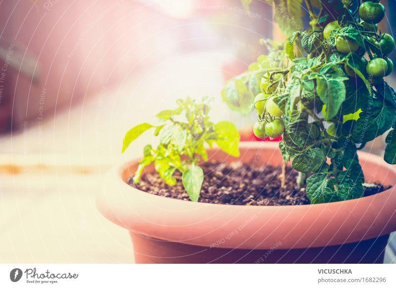 Wachsende Gemüse in Kübel auf Balkon Natur Stadt Sommer Gesunde Ernährung gelb Essen Stil Lifestyle Garten Lebensmittel Design Wohnung Häusliches Leben