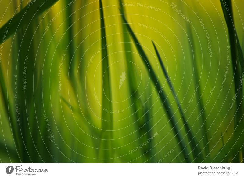 Gemälde einer Wiese Natur grün Pflanze Umwelt dunkel Gras hell Hintergrundbild Makroaufnahme