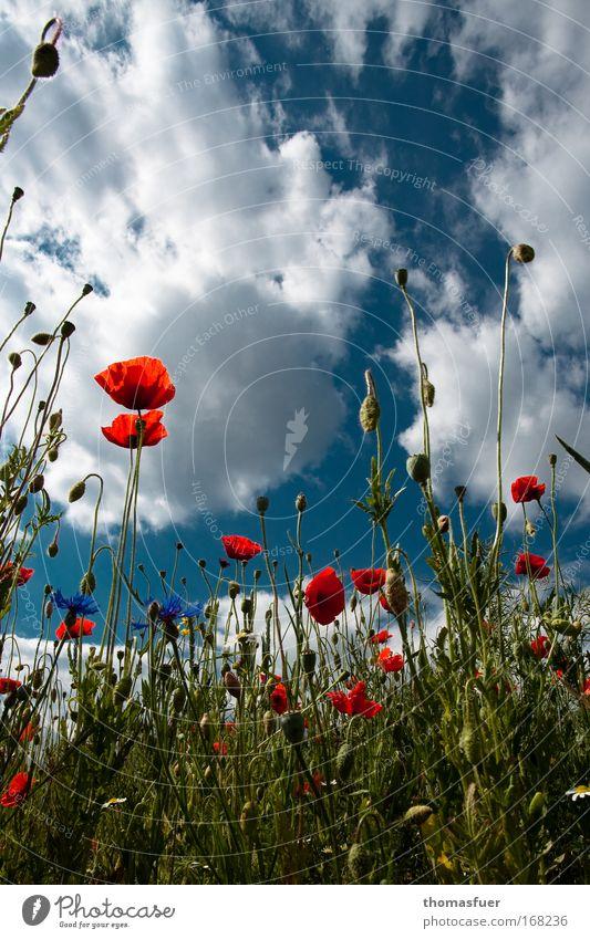 SOMMER!!!! 2 Farbfoto mehrfarbig Außenaufnahme Menschenleer Textfreiraum oben Tag Sonnenlicht Starke Tiefenschärfe Umwelt Natur Himmel Sommer Schönes Wetter