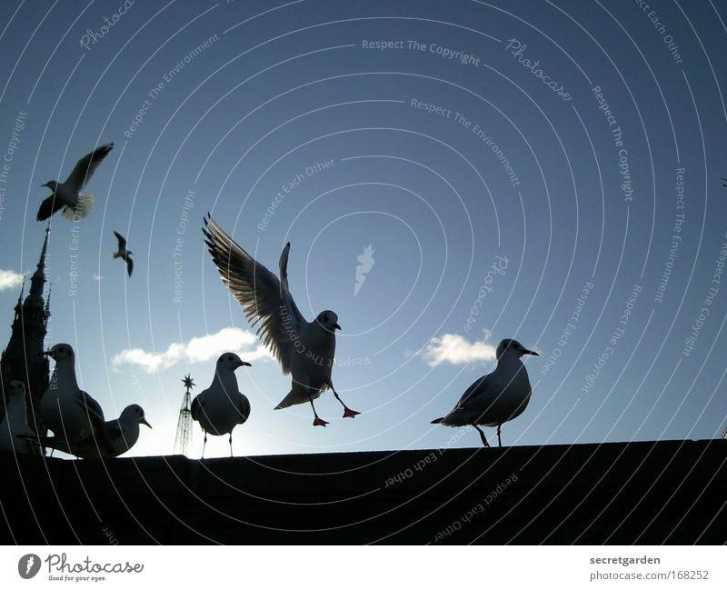 the show must go on. blau schwarz dunkel kalt Wand Mauer Vogel Kraft elegant warten fliegen Kirche Brücke Flügel bedrohlich Tiergruppe