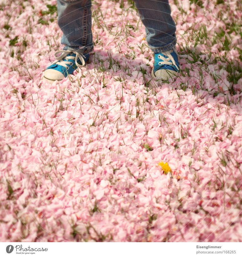 [HH 04.09] Blütenfotografiererei Kind blau Frühling Beine gehen Kindheit rosa warten stehen Zukunft Turnschuh Blütenblatt Selbstständigkeit 3-8 Jahre Schuhe