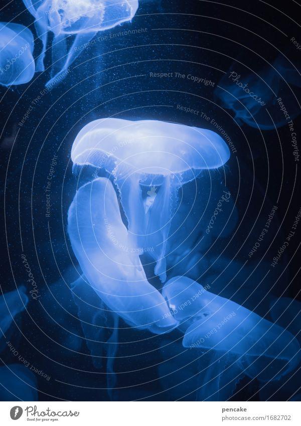 freischwebend blau Wasser Tier kalt Schwimmen & Baden Urelemente Schweben Aquarium Qualle