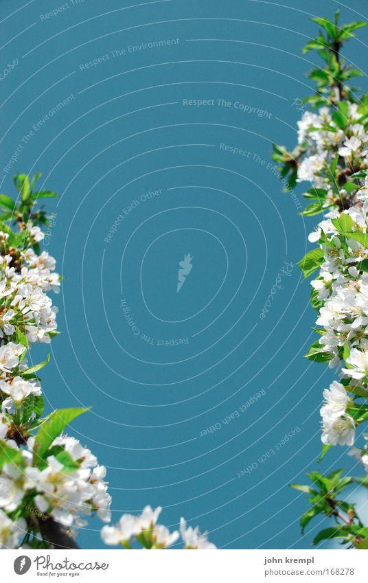 randerscheinung Farbfoto mehrfarbig Außenaufnahme Textfreiraum oben Textfreiraum unten Textfreiraum Mitte Tag Pflanze Himmel Wolkenloser Himmel Frühling Baum