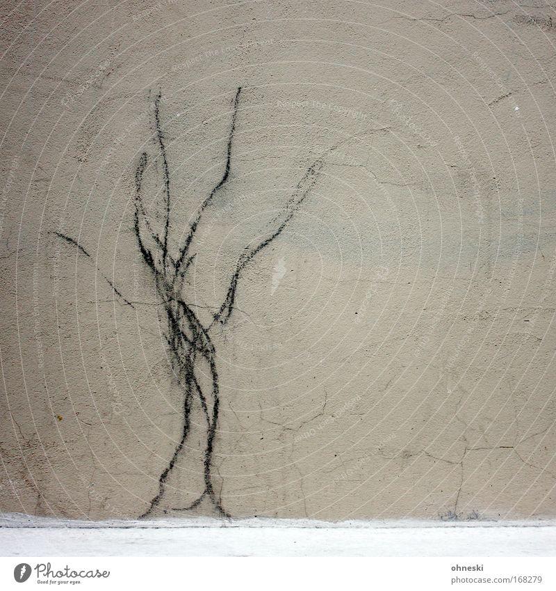 Baum Gedeckte Farben Muster Menschenleer Textfreiraum rechts Zentralperspektive Haus Mauer Wand Fassade Zeichen trist Riss Zeichnung