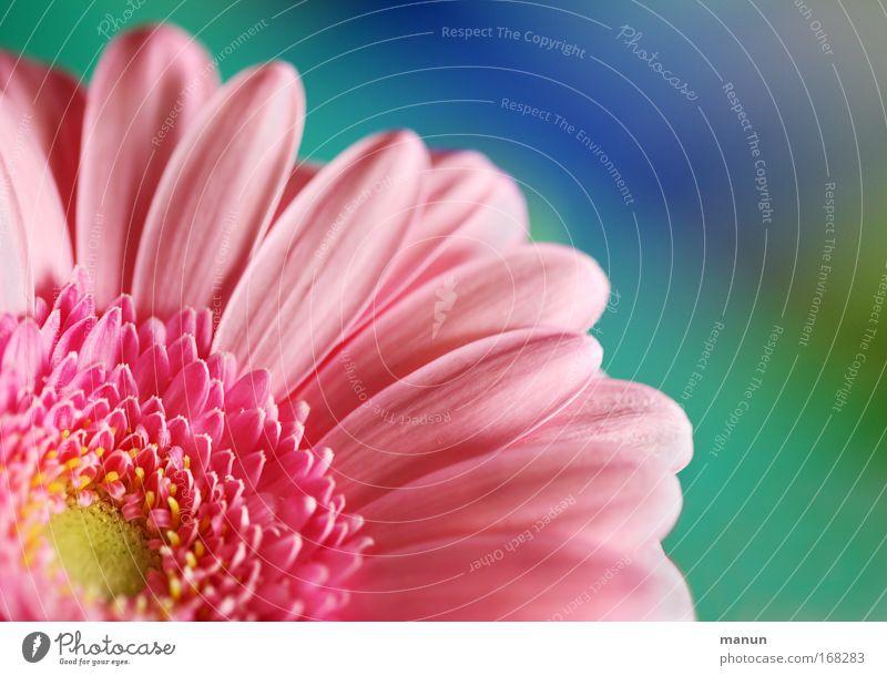 Rosa Natur Pflanze schön Sommer Blume ruhig Frühling Blüte Stil rosa Zufriedenheit Design Häusliches Leben Dekoration & Verzierung elegant Geburtstag