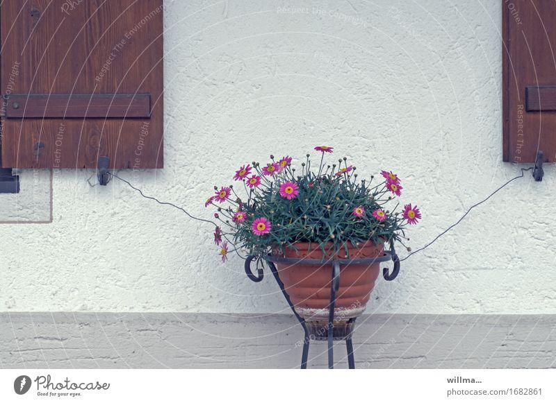 anhänglichkeit Blumentopf Fensterladen Wand Draht Sicherheit befestigen doppelt gesichert Absicherung Pflanze ländlich Farbfoto Außenaufnahme