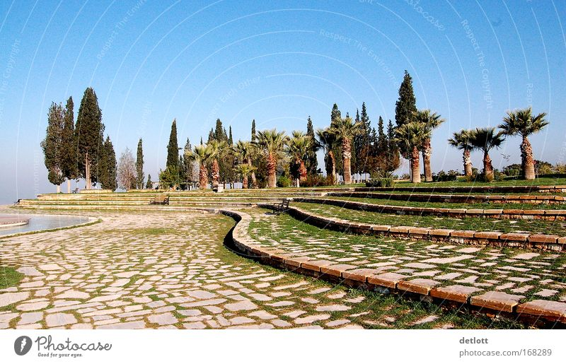 Türkischer Morgen Farbfoto Außenaufnahme Muster Menschenleer Textfreiraum oben Panorama (Aussicht) Natur Landschaft Baum Park Stimmung ruhig groß Tag