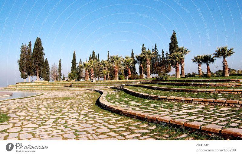 Türkischer Morgen Natur Baum ruhig Park Landschaft Stimmung groß