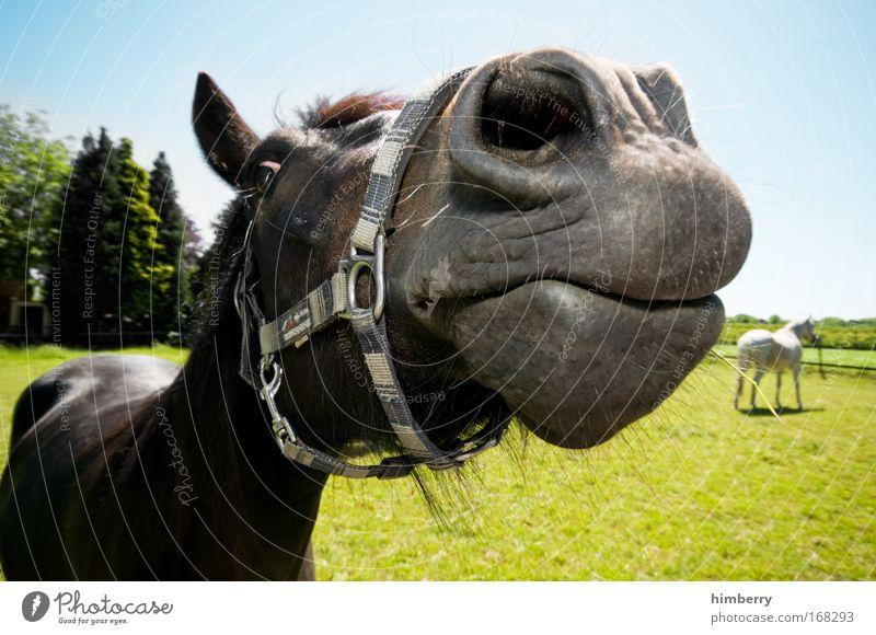 pferdekuss Natur grün blau Pflanze Freude Tier Wiese Glück Landschaft Zufriedenheit Feld Pferd außergewöhnlich Neugier Interesse Stolz