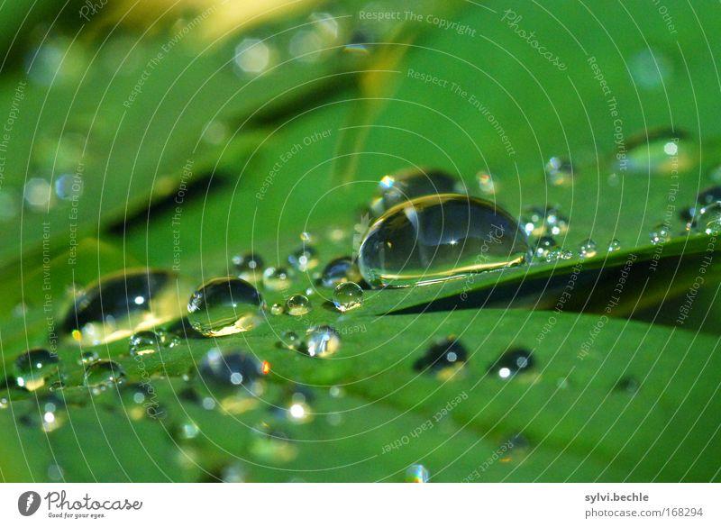 the never ending story Natur Wasser schön grün Pflanze ruhig Blatt kalt Regen glänzend Wetter nass Wassertropfen frisch mehrere Tropfen