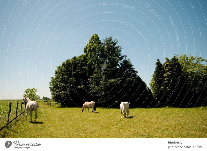 ferien auf dem ponyhof Natur Baum grün blau Pflanze Sommer Tier Wiese Gras Frühling Landschaft Feld groß Pferd Kitsch Idylle