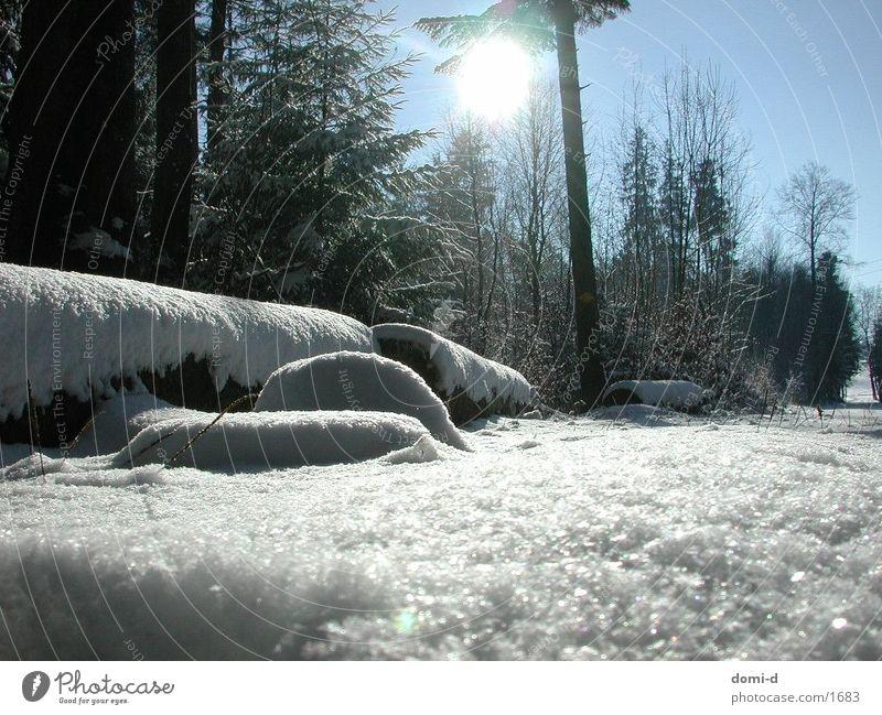 Winterwald Wald Holz Baum Schnee Landschaft Natur Sonne