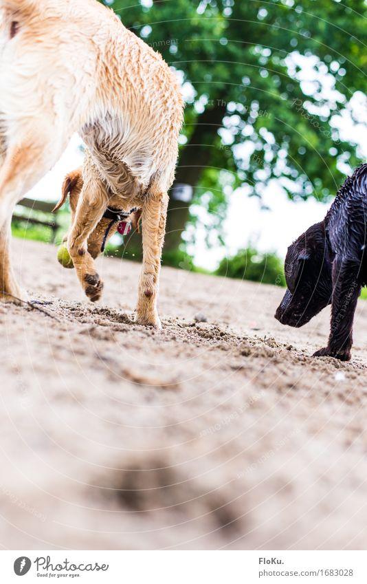 Spielzeit Hund Natur grün Tier Tierjunges gelb Spielen Sand braun wild Park Erde Tierpaar niedlich Ball Fell