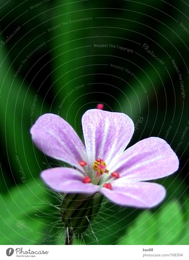 Im Wald Natur Pflanze Frühling Sommer Blume Blüte Duft violett grün Feld Blühend Wachstum kaz68 Wiese Idylle Wildpflanze Park ästhetisch Gras scharf Unschärfe