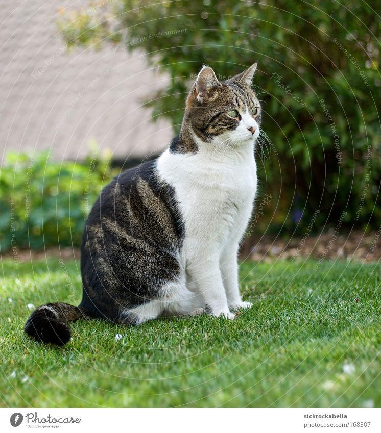 mini Farbfoto Außenaufnahme Menschenleer Tag Tier Haustier Katze 1 sitzen Fröhlichkeit Glück