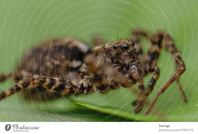 Modeljob einer Spinne Landschaft Pflanze Baum Blume Gras Sträucher Moos Blatt Garten Park Wiese Wald Tier Wildtier Tiergesicht 1 krabbeln Spinnennetz Farbfoto