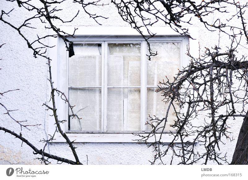 **aufgegeben** alt weiß Winter Haus schwarz Wand Fenster grau Traurigkeit gehen Armut geschlossen Trauer Zeitung einfach Ast