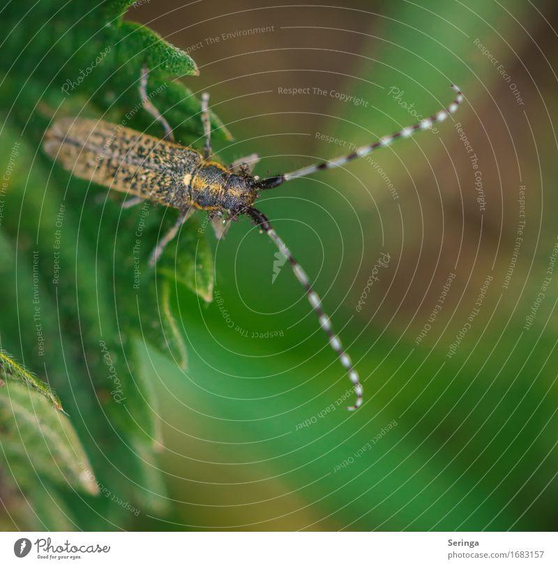 Kehrseite Natur Landschaft Pflanze Tier Gras Blatt Grünpflanze Wildpflanze Garten Park Wildtier Käfer Tiergesicht Flügel 1 fliegen Insekt Fühler Käferbein