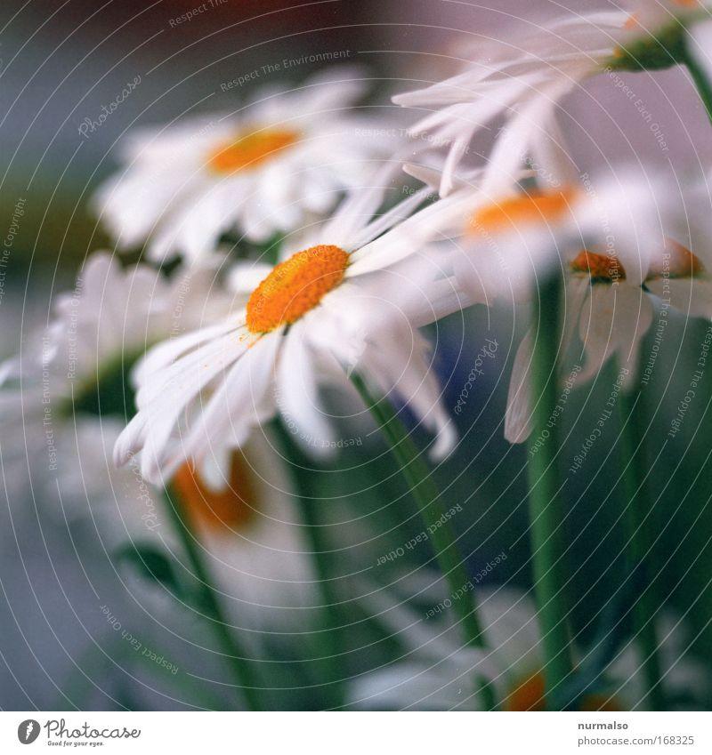 Blumen zum Sonntag weiß Pflanze Tier gelb Blüte Wohnung Design ästhetisch Häusliches Leben Dekoration & Verzierung einfach Kitsch Frieden nah Freundlichkeit