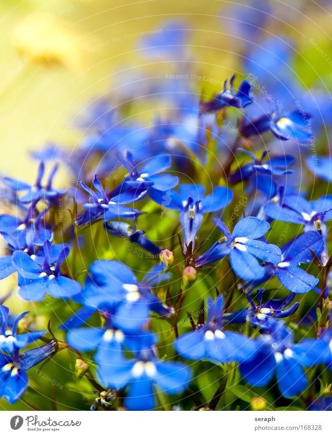 Blümchen schön Wiese frisch Dekoration & Verzierung wild natürlich Lebewesen niedlich Pollen Gartenarbeit Blumenhändler Beruf Kräutergarten