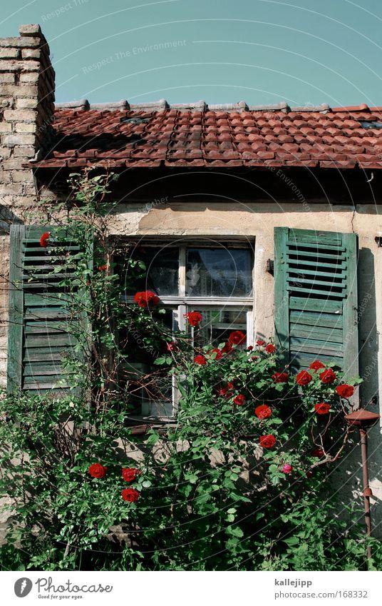 i never promised you a rosegarden Himmel alt schön Pflanze Blume Haus Fenster Wand Blüte Garten Mauer Park Fassade Dach Rose Spitze