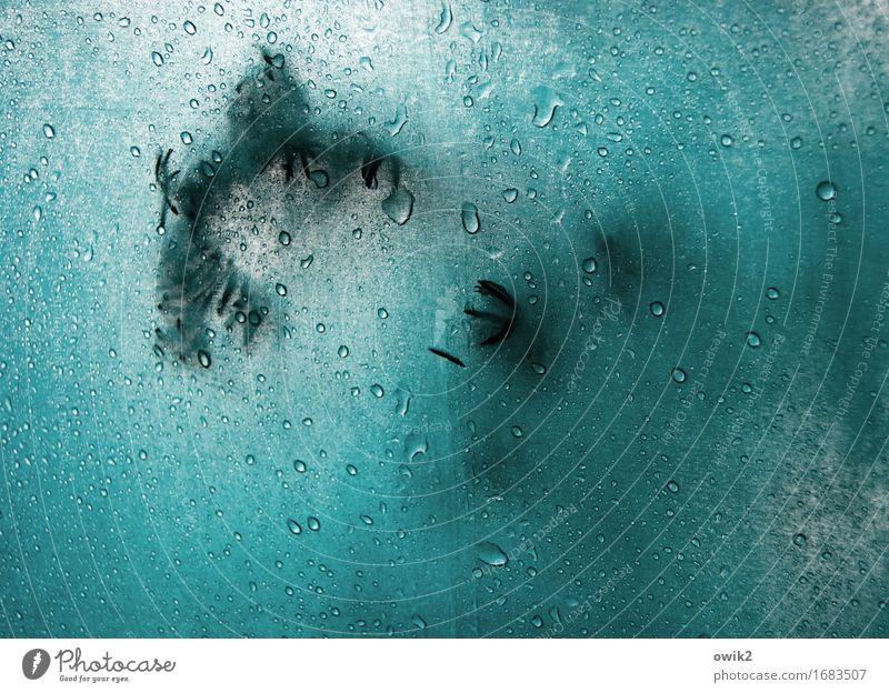 Regentag Wasser Wassertropfen Zweig Nadelbaum Tannennadel Regenschirm Kunststoff authentisch klein nah nass türkis Gelassenheit geduldig Schutz Stoff berühren