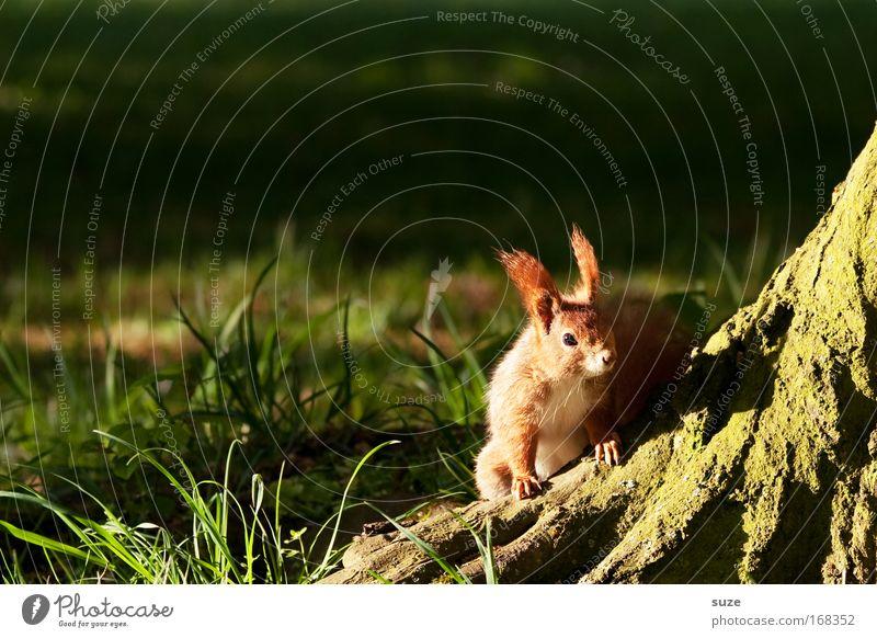 Auf der Lauer Natur Sommer Pflanze Baum Tier Landschaft Umwelt Wiese Gras klein natürlich Wildtier authentisch Schönes Wetter niedlich beobachten